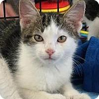 Adopt A Pet :: Simon - East Hanover, NJ