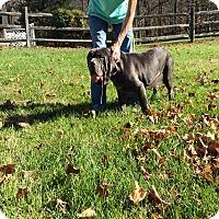 Adopt A Pet :: Opal-VA - Virginia Beach, VA