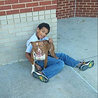 Pit Bull Terrier/Labrador Retriever Mix Dog for adoption in Greenville, North Carolina - Penny