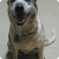 Adopt A Pet :: Patches - Gary, IN