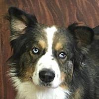 Adopt A Pet :: Rango - Modesto, CA