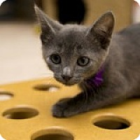 Adopt A Pet :: Dusty - McHenry, IL