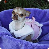 Adopt A Pet :: LEMONDROP - Newport Beach, CA