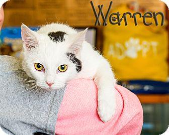 Domestic Shorthair Cat for adoption in Somerset, Pennsylvania - Warren