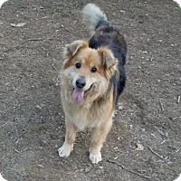 Adopt A Pet :: Maisy - Harrisburg, PA
