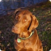 Adopt A Pet :: Sage - Springfield, MO