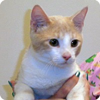 Adopt A Pet :: Sheldon - Wildomar, CA