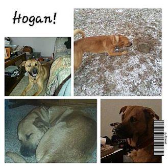 German Shepherd Dog/Husky Mix Dog for adoption in Garden City, Michigan - Hogan