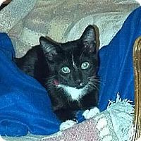 Adopt A Pet :: Pip - Morgan Hill, CA