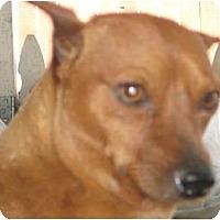 Adopt A Pet :: Scruffy - Sun Valley, CA