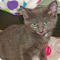 Adopt A Pet :: Scallion - Secaucus, NJ