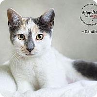 Adopt A Pet :: Candie - Phoenix, AZ