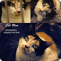 Adopt A Pet :: Cali Adption Fee Paid - McDonough, GA