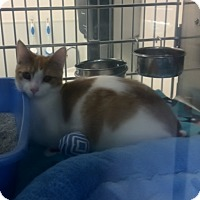 Adopt A Pet :: Nelson - Byron Center, MI