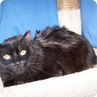 Adopt A Pet :: Ace - Colorado Springs, CO