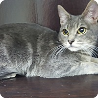 Adopt A Pet :: John F Kennedy - Albemarle, NC