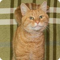 Adopt A Pet :: Harry - Elmwood Park, NJ