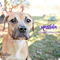Adopt A Pet :: Matilda - Cherry Hill, NJ
