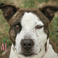 Adopt A Pet :: Royal - Cheney, KS