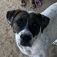 Adopt A Pet :: Patti - Lancaster, CA