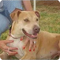Adopt A Pet :: CINNAMON ROSE - Phoenix, AZ