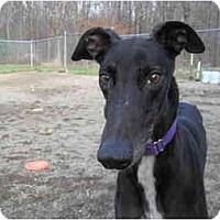 Adopt A Pet :: Elvis (Elvis Lives) - Chagrin Falls, OH