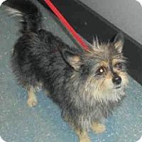 Adopt A Pet :: Angel - Orlando, FL