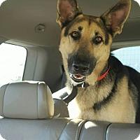 Adopt A Pet :: LUCIA - SAN ANTONIO, TX