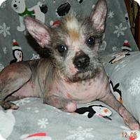Adopt A Pet :: Dougie - Umatilla, FL