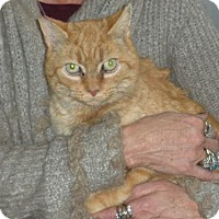 Adopt A Pet :: Marigold - Washington, VA