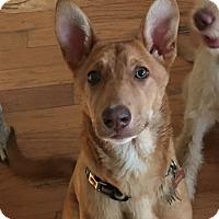 Adopt A Pet :: Copper - Ball Ground, GA