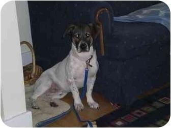 Basset Hound Mix Dog for adoption in Waukesha, Wisconsin - Buddy