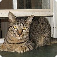Adopt A Pet :: Benny - Bulverde, TX