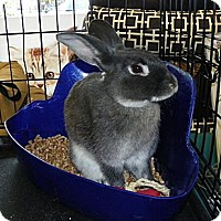 Adopt A Pet :: Prince - North Gower, ON