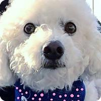 Adopt A Pet :: Tammy - La Costa, CA
