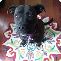 Adopt A Pet :: Molly - Westminster, MD