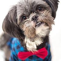 Adopt A Pet :: Haze (aka Chewie) - Millersville, MD