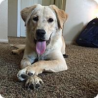 Adopt A Pet :: Bonnie - Chewelah, WA