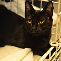 Adopt A Pet :: Taffy - Beacon, NY