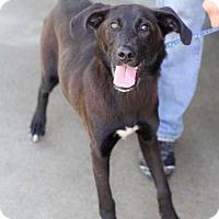 Adopt A Pet :: Arcadia - Sparta, NJ