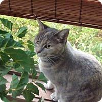 Adopt A Pet :: Torie - Cincinnati, OH