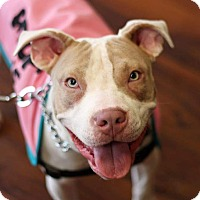 Adopt A Pet :: Louise - Baltimore, MD