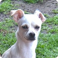 Adopt A Pet :: Fiona - Aqua Dulce, CA