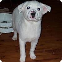 Adopt A Pet :: Possum - Cleveland, OH