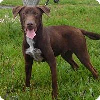 Adopt A Pet :: CAMO - McKinleyville, CA