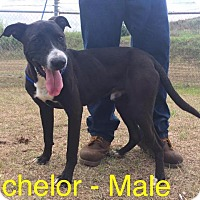Adopt A Pet :: Bachelor - Waycross, GA