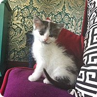 Adopt A Pet :: Gregory - Los Angeles, CA