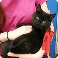 Adopt A Pet :: Teensy - Reston, VA