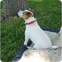 Adopt A Pet :: Skeeter in Victoria - Houston, TX