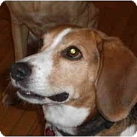 Adopt A Pet :: Giles - Rigaud, QC